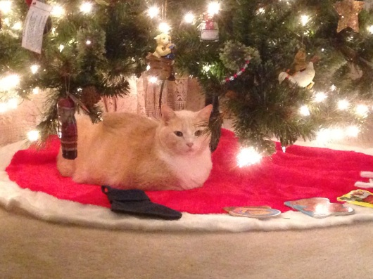Melvyn under the Christmas tree